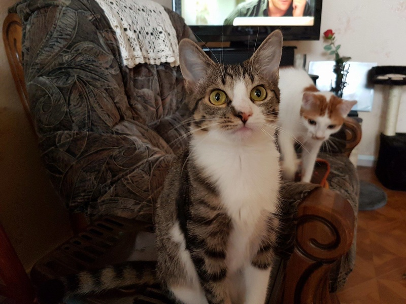 VENUS (ex TITI) - chaton femelle, née avril 2016 - En FA chez Abysse (92) - ADOPTEE PAR ANNE et FATLUM (depart94) Titi1111