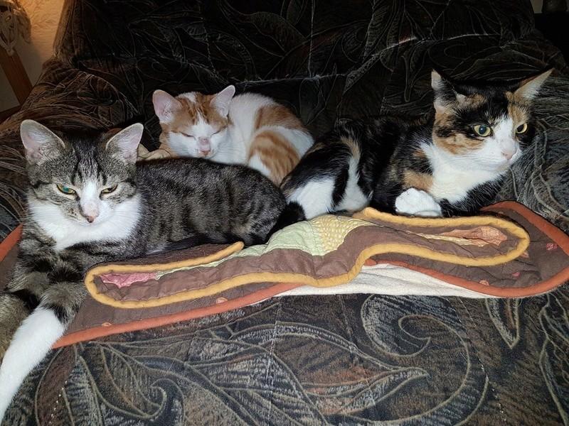 VENUS (ex TITI) - chaton femelle, née avril 2016 - En FA chez Abysse (92) - ADOPTEE PAR ANNE et FATLUM (depart94) Titi_q12