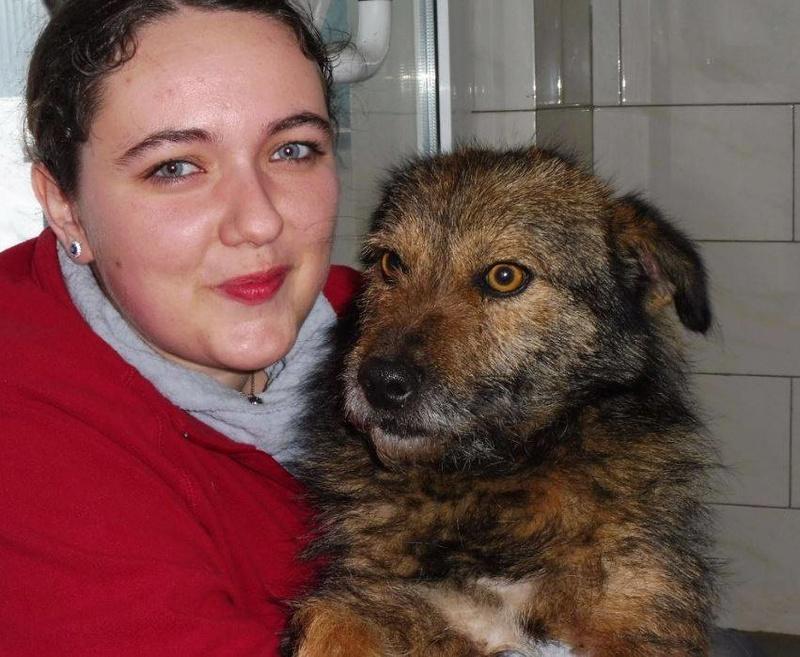 YODA - chien croisé fox mâle de taille petite né en 2016 - (Pascani) REMEMBER ME LAND- adopté par Leo (Belgique) Yoda210