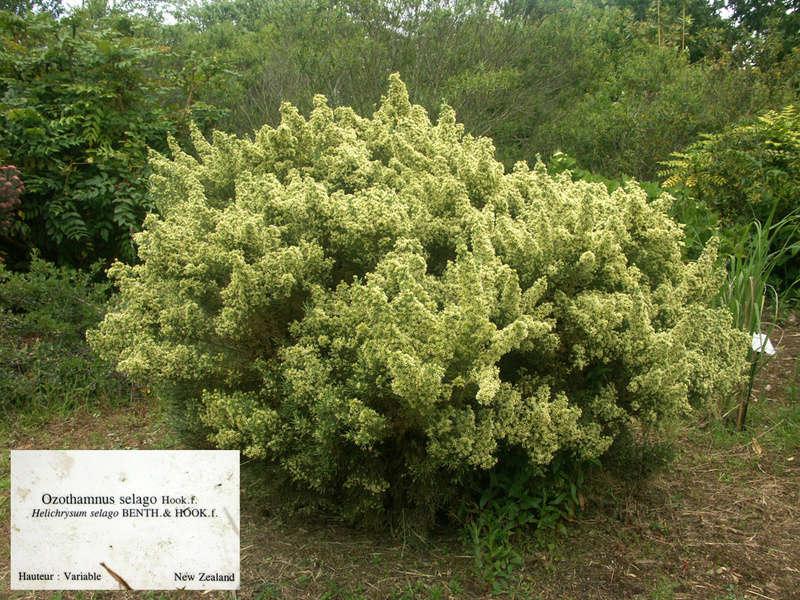 (29) Arboretum de Keracoual - Henvic  Ozotha10