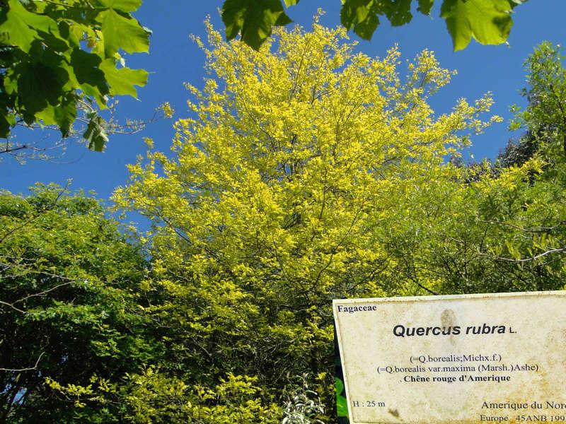 (29) Arboretum de Keracoual - Henvic  - Page 2 Quercu16