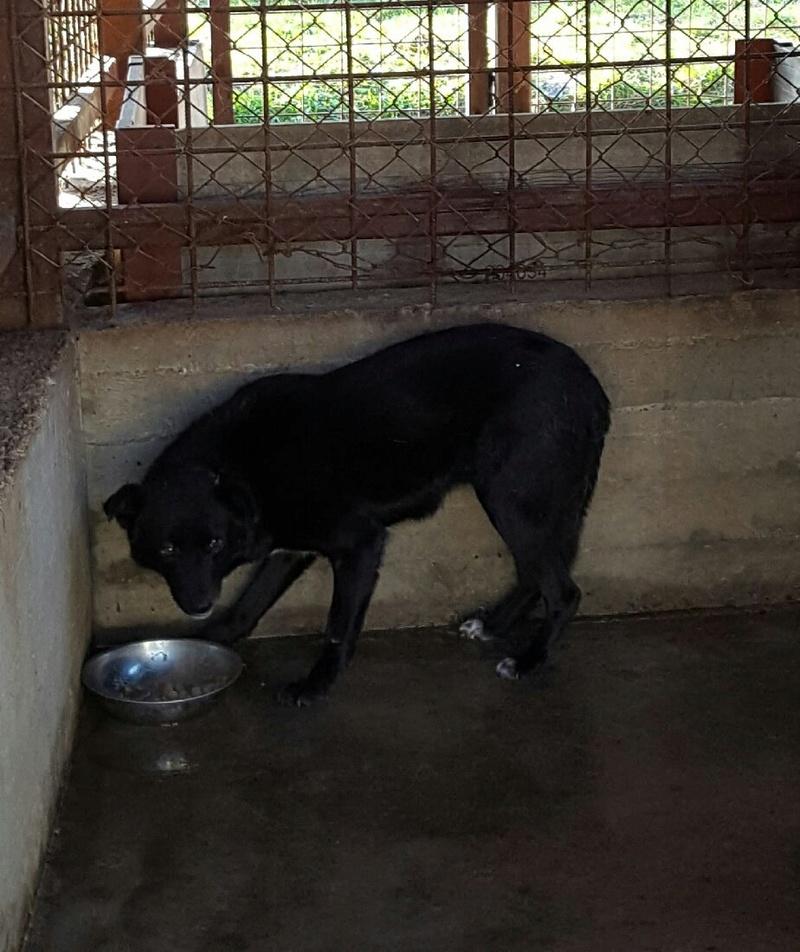 EBONY M-X 4 ans taille moyenne 15KG-FOURRIERE ORASTIE- Un chien noir timide-En pension à Timisoara - Page 2 15025610
