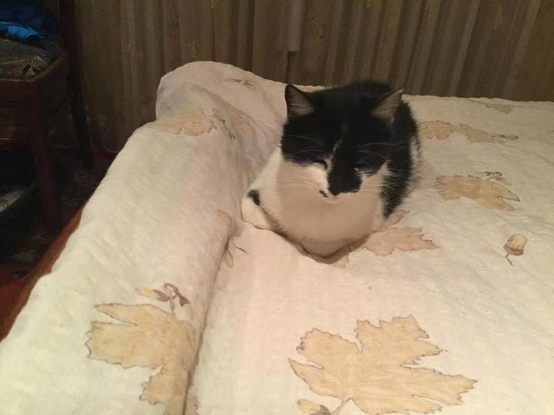 MILA chatte née 2015 - ORASTIE/RUE - Sauvée de la tempête de neige -Réservée fa Nathalie (67)- 16118010