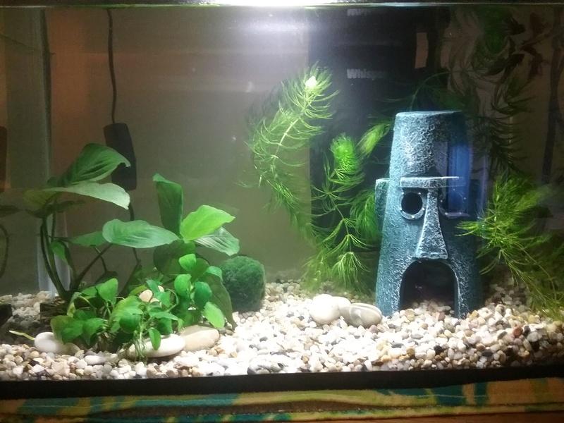 Aquarium tetra 5 gallon 20170110