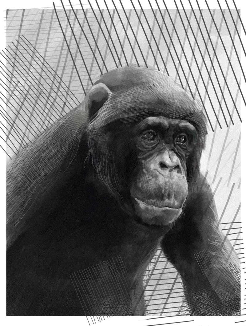 Etudes de Mihail - Page 4 Monkey10