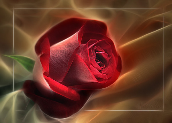 Une rose à offrir n°2 - Page 11 6f0c6310