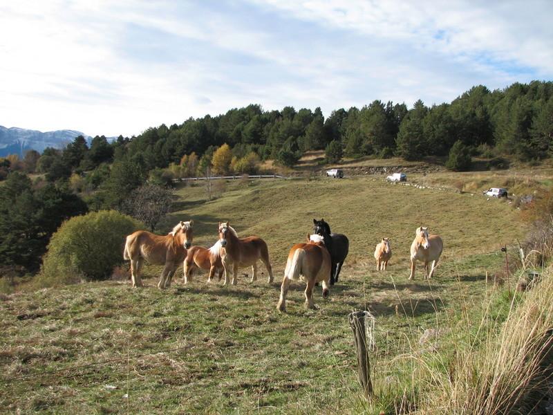 Sortie Espagne les 11 et 12 novembre Img_0316