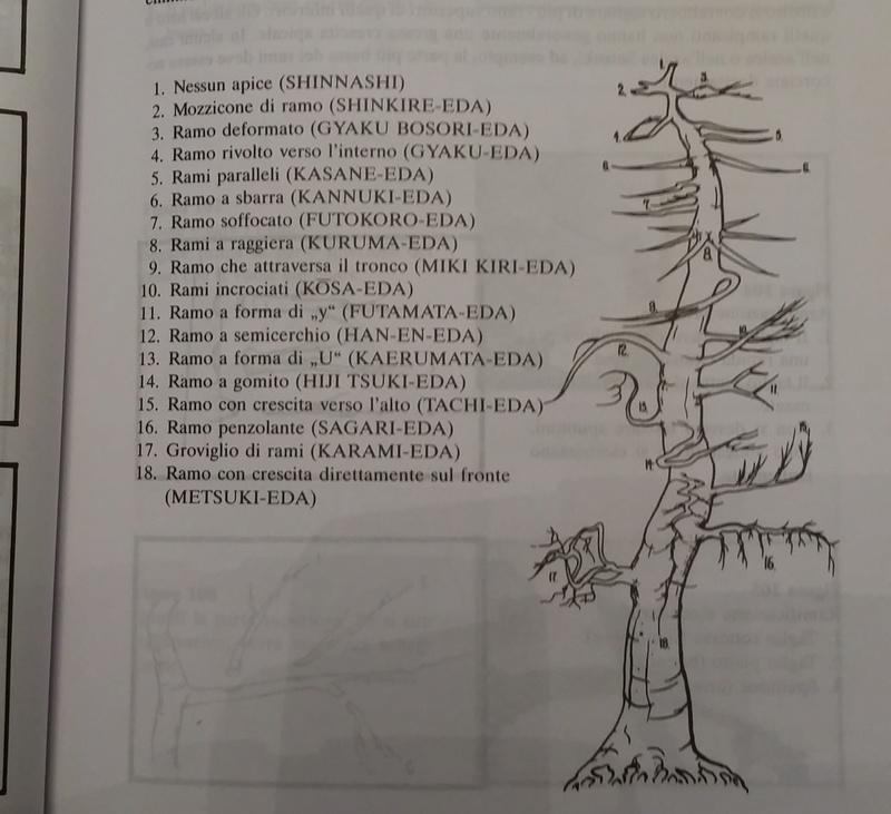 Potatura di formazione su quercia 20151010