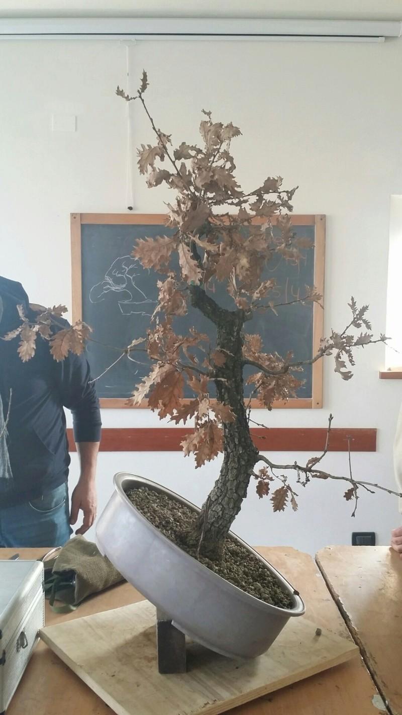 "WIP - Roverella ""pesce d'aprile"" 20170122"