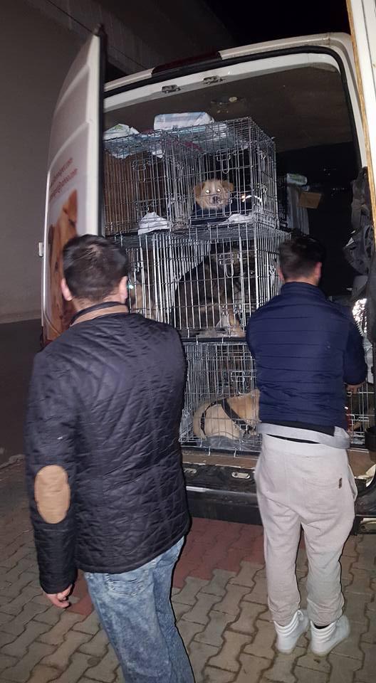 Arrivée du 28 janvier 2017 par camion (Roumanie) - Page 2 Img_0823