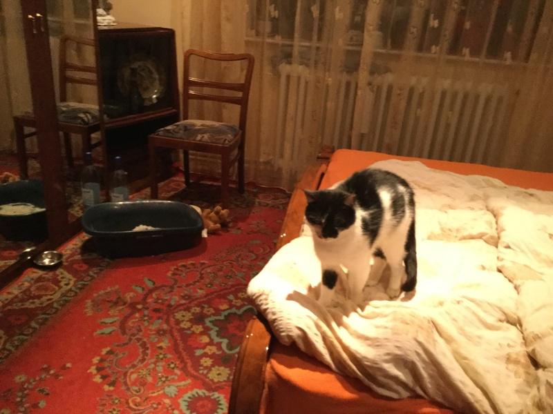 MILA chatte née 2015 - ORASTIE/RUE - Sauvée de la tempête de neige -Réservée fa Nathalie (67)- Img_1027