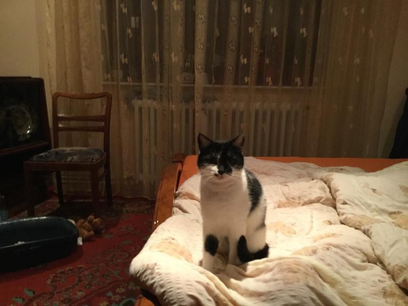 MILA chatte née 2015 - ORASTIE/RUE - Sauvée de la tempête de neige -Réservée fa Nathalie (67)- Img_1028