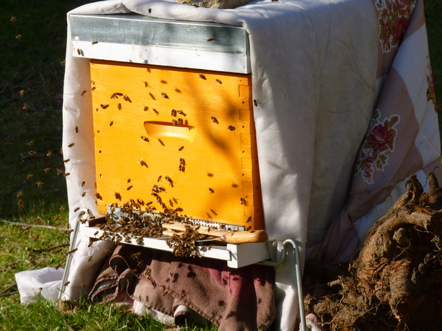 Abeilles, ruches et jardins - Page 2 P1040911