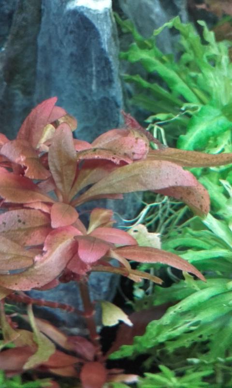 Trous dans les plantes 20170111