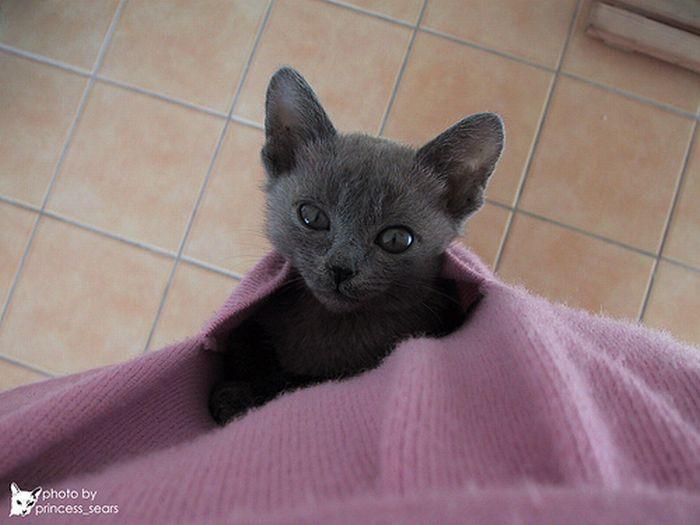 Les chatons tout mignon 11410