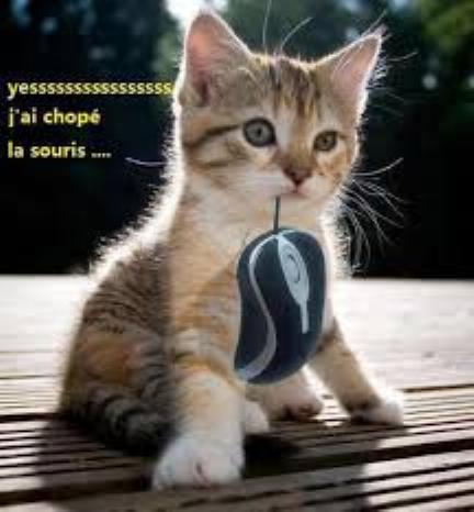 Les chatons tout mignon Tri_0410