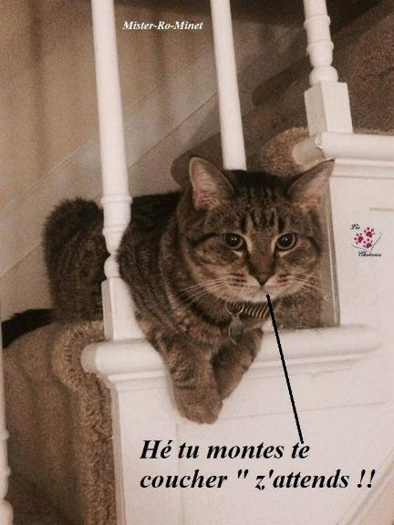 Les chatons tout mignon Tri_7110