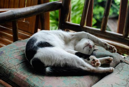 Les chatons tout mignon Tribu_32