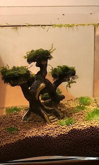 6 BACS ESCALIER dont 4 avec crevettes et 2 avec plantes Dsc05229