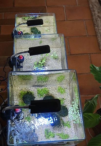 6 BACS ESCALIER dont 4 avec crevettes et 2 avec plantes - Page 2 Dsc05410