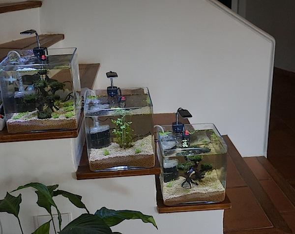 6 BACS ESCALIER dont 4 avec crevettes et 2 avec plantes - Page 2 Dsc05412