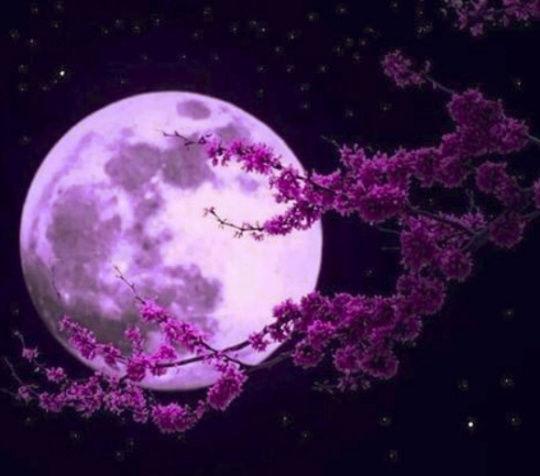 Au clair de Lune - Page 3 Ob_28210