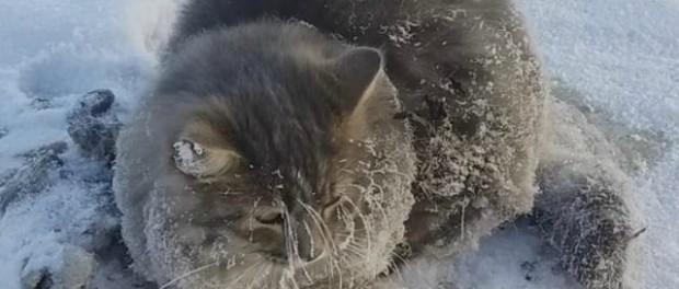 Необычное спасение кошки в Челябинской области Ice-ca10