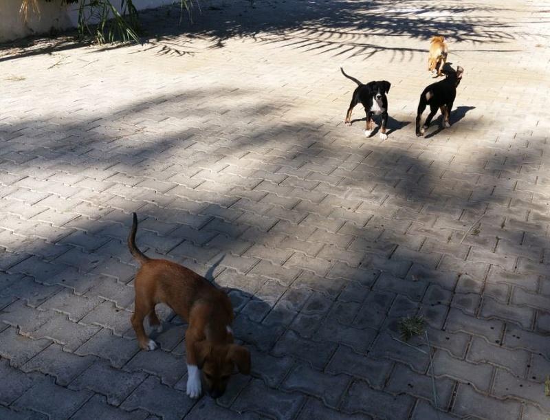 Urgence Turquie / 20 chatons beaux, très calins, de 3 mois à 2 ans max cherchent adoption et soins ! 1010