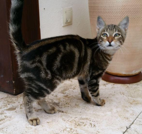 Urgence Turquie / 20 chatons beaux, très calins, de 3 mois à 2 ans max cherchent adoption et soins ! 110