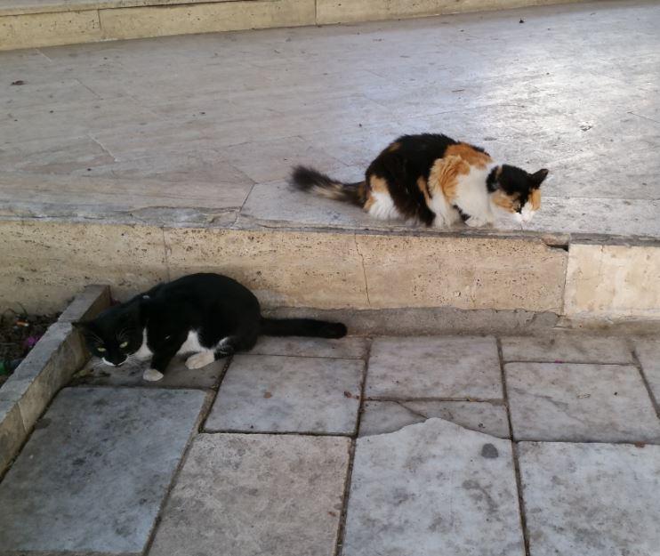 Urgence Turquie / 20 chatons beaux, très calins, de 3 mois à 2 ans max cherchent adoption et soins ! 1210