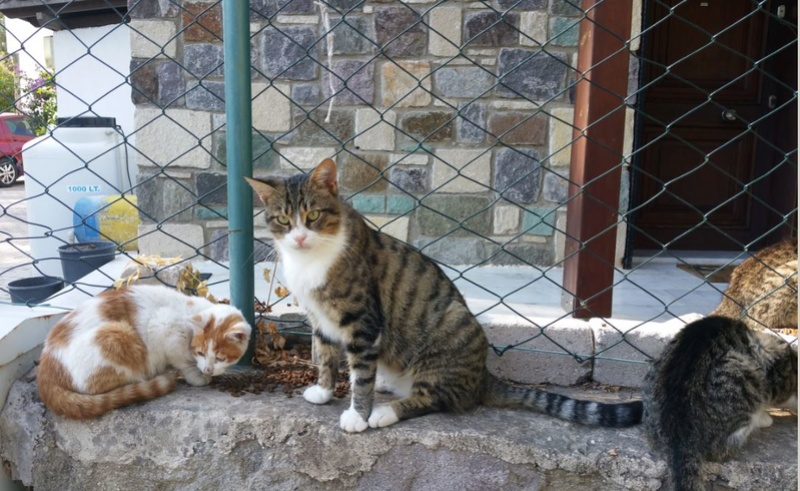 Urgence Turquie / 20 chatons beaux, très calins, de 3 mois à 2 ans max cherchent adoption et soins ! 1510