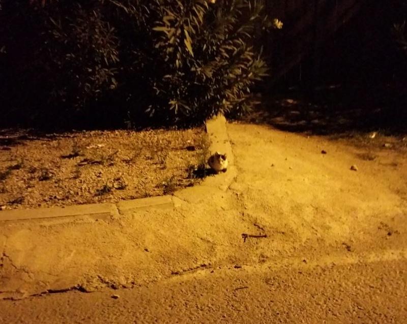 Urgence Turquie / 20 chatons beaux, très calins, de 3 mois à 2 ans max cherchent adoption et soins ! 1610