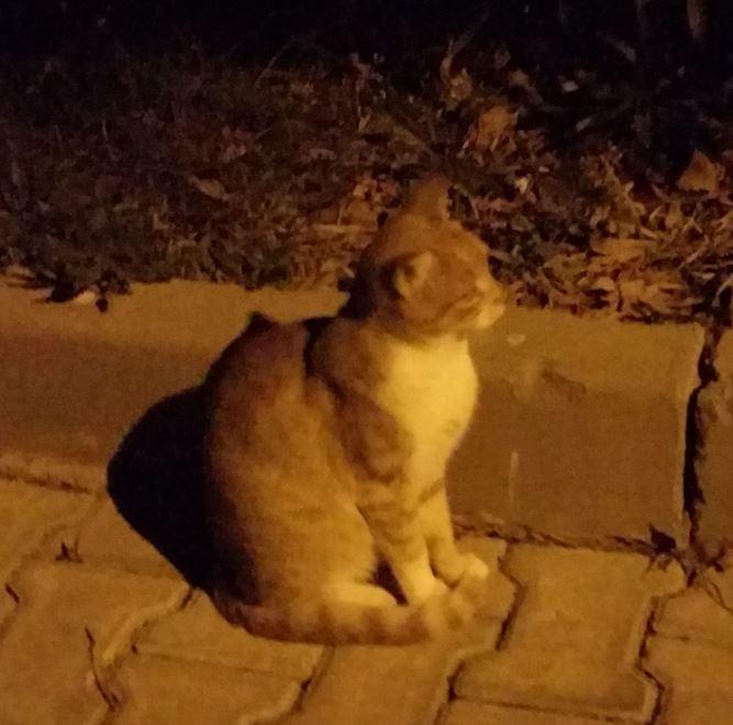 Urgence Turquie / 20 chatons beaux, très calins, de 3 mois à 2 ans max cherchent adoption et soins ! 1810