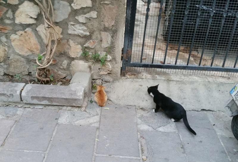 Urgence Turquie / 20 chatons beaux, très calins, de 3 mois à 2 ans max cherchent adoption et soins ! 1910