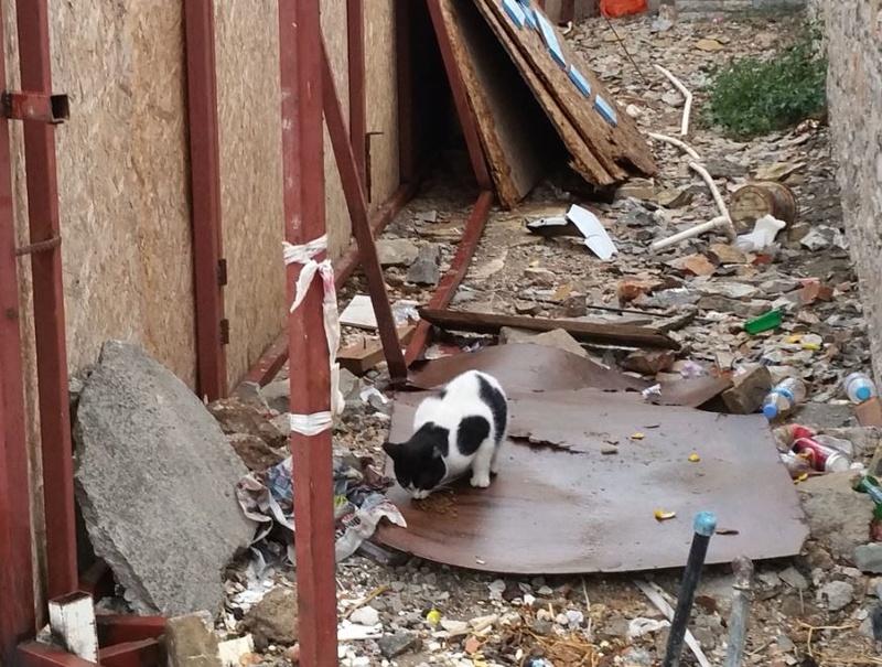 Urgence Turquie / 20 chatons beaux, très calins, de 3 mois à 2 ans max cherchent adoption et soins ! 210