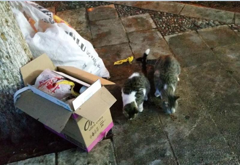 Urgence Turquie / 20 chatons beaux, très calins, de 3 mois à 2 ans max cherchent adoption et soins ! 310