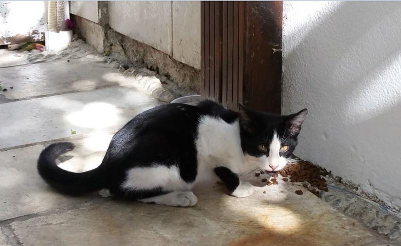 Urgence Turquie / 20 chatons beaux, très calins, de 3 mois à 2 ans max cherchent adoption et soins ! 410