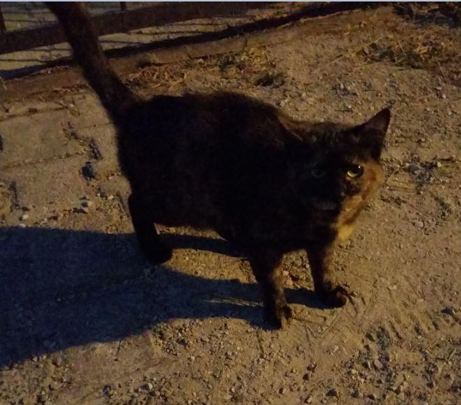 Urgence Turquie / 20 chatons beaux, très calins, de 3 mois à 2 ans max cherchent adoption et soins ! 710
