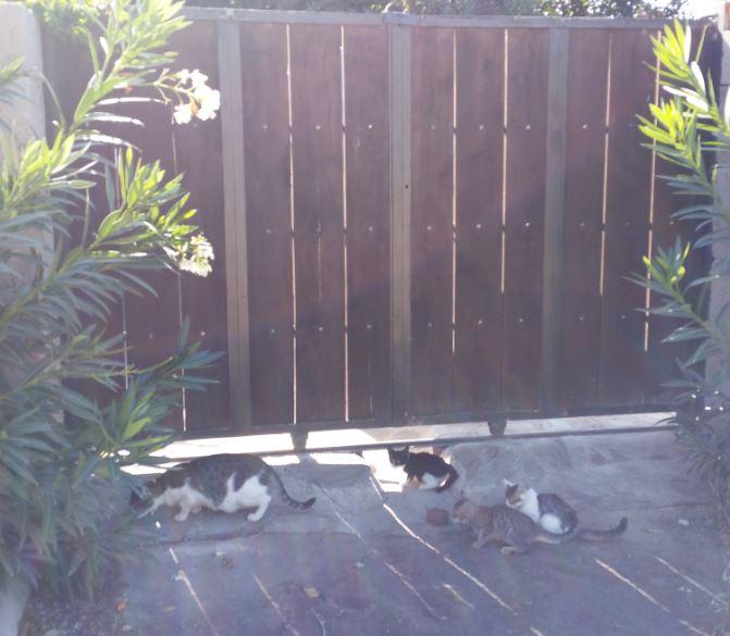 Urgence Turquie / 20 chatons beaux, très calins, de 3 mois à 2 ans max cherchent adoption et soins ! 810