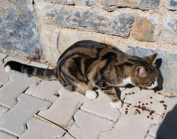 Urgence Turquie / 20 chatons beaux, très calins, de 3 mois à 2 ans max cherchent adoption et soins ! 910