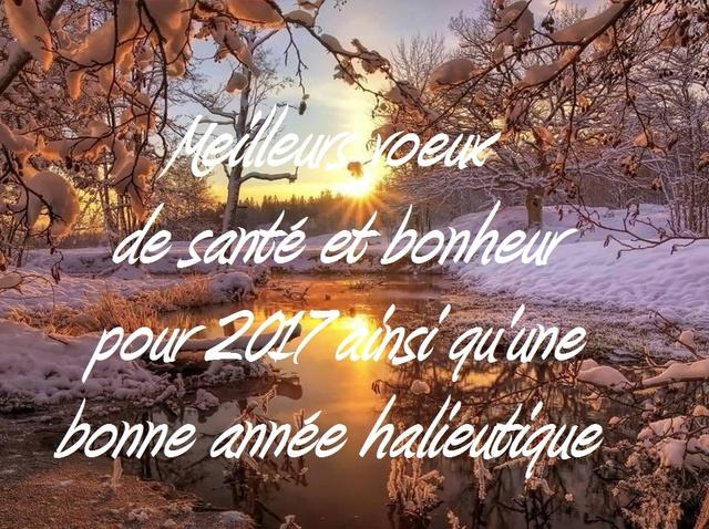 Bonne fin d'année et bonne nouvelle 2017 Voeux_11