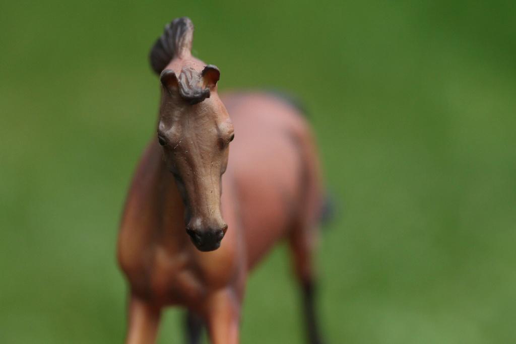 my Deborah McDermott's horses Collec11