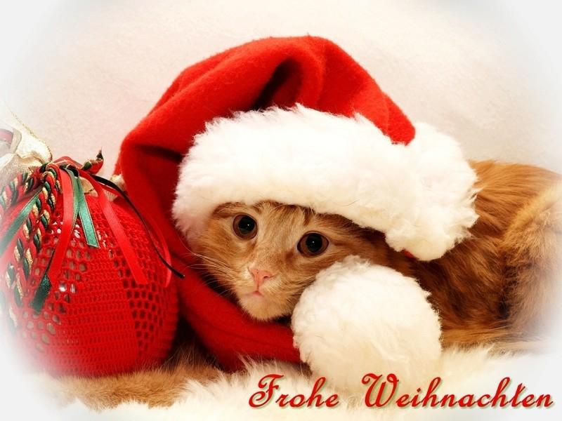 Frohe Weihnachten wünscht Sternenfall Stabal11