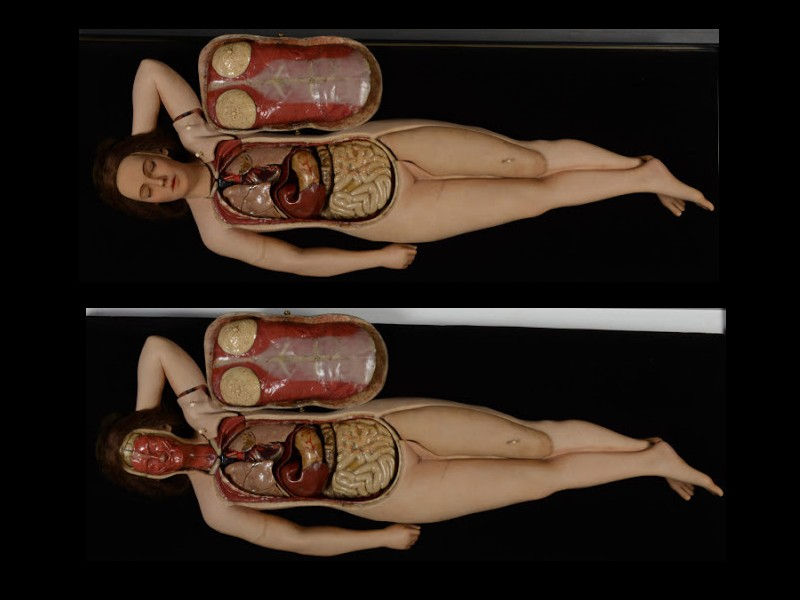 Le bref et mystique règne du cadavre de cire J1016