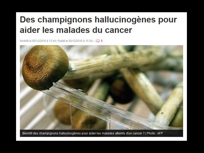 Des champignons hallucinogènes pour aider les malades du cancer  Sans_273