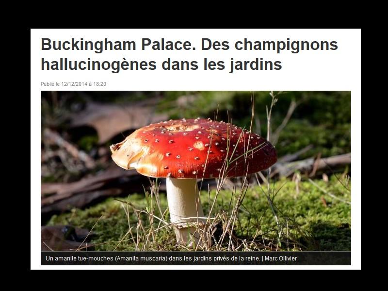 Des champignons hallucinogènes pour aider les malades du cancer  Sans_274