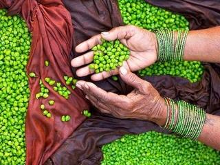 Semences paysannes libres Img_0113