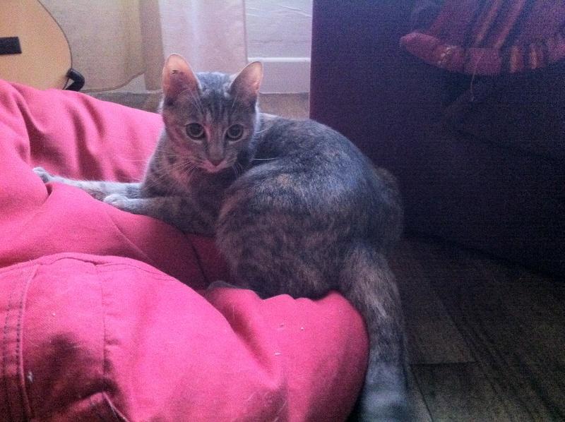 josiane - JOSIANE, femelle tricolore et tigrée, née le 23/11/2014 Img_1814