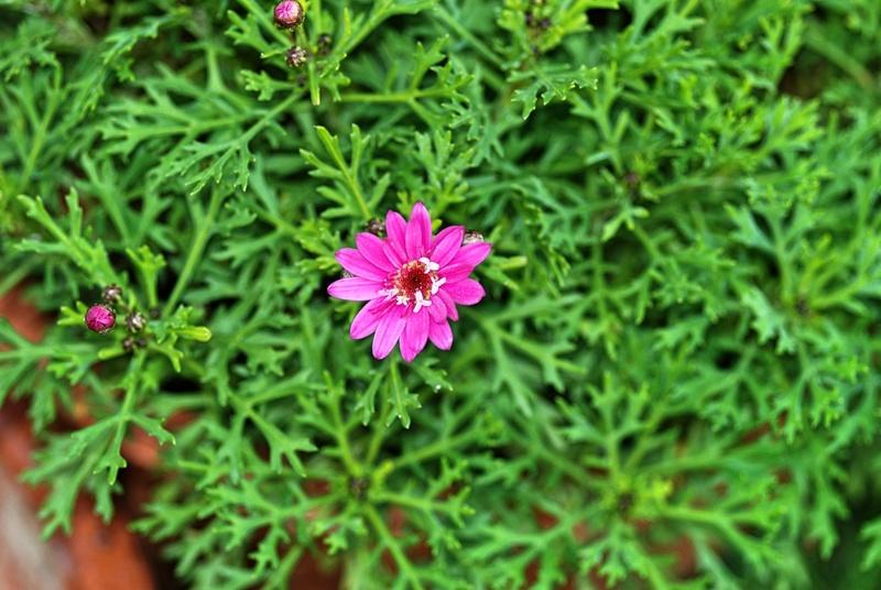 La fioritura di dicembre  Fiore_10