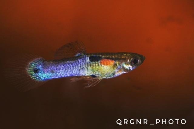 Ma Fish'étagère et les autres  - Page 24 Img_2012